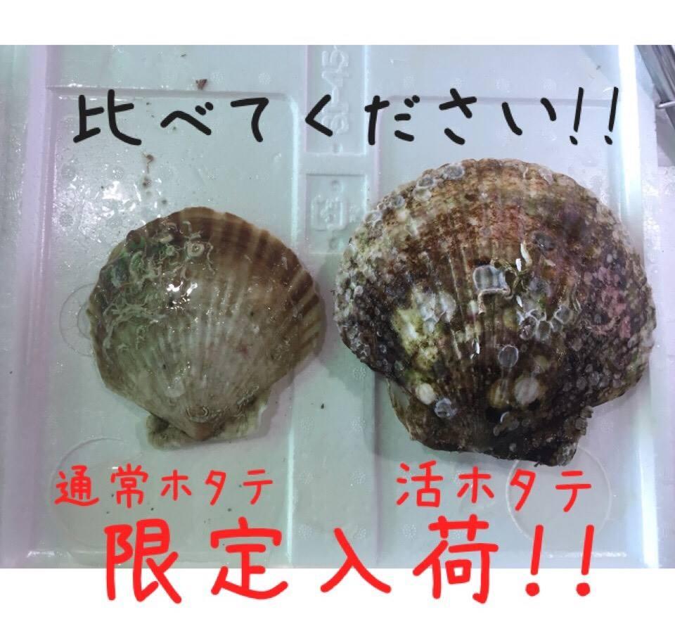 限定入荷!活ホタテ!!【出張牡蠣小屋】牡蠣奉行inイオンモール川口